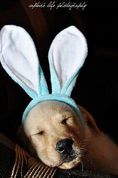 IT IS AN EASTER PUPPY!!!! LOL so cute