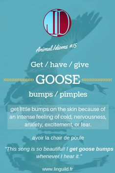 """Animal idiom of the day: """"Get/have/give goose bumps/pimples"""" LinguiLD /Idioms/ (Design by LinguiLD)"""