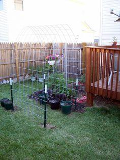 From the GARDEN WEB forum...cattle panel (fencing) as a garden trellis. Cool!