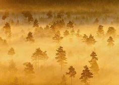 Foggy swamp in Finland. This was shot in the middle of the night when the Sun began to rise.