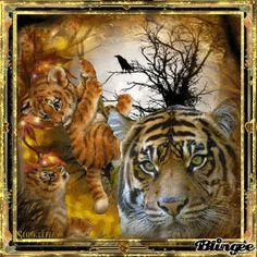Malaysian tigers.