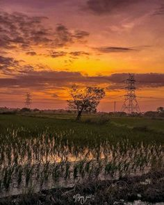 Mobile Photography Tips, Indian Photography, Sunset Photography, Sunset Lover, Sunset Pictures, Incredible India, Vineyard, The Incredibles, Awesome