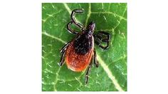 Chronic Lyme disease is a controversial subject for many doctors - WFLA News Channel 8