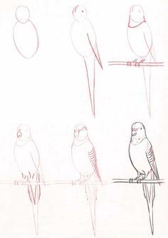 Muhabbet Kuşu Resmi Çizimi