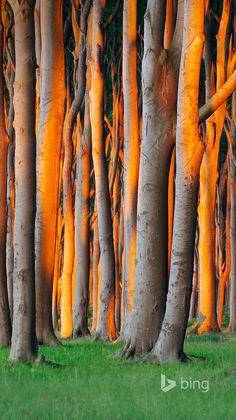 Nienhagen Wood in Mecklenburg-Vorpommern, Germany (Radius Images/Alamy)