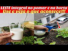 Coloque leite integral na horta e veja o que vai acontecer!!! - YouTube
