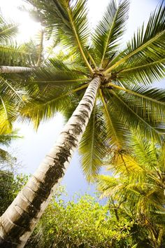 Sometimes the most beautiful images come when you look straight up - palms