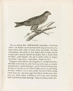 2 volumes, 4to (210 x 165mm.),255 half-page etched plates by Peter Mazell, near-contemporary half calf,[Jackson, <em>Bird Etchings</em>, pp.148-156; Mullens and Swan, p.607; Nissen <em>ZBI</em> 966; Zimmer, p.660], bookplate of Madelaine Jay