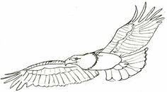 how to draw eagles   Bald Eagle Pencil Drawing, step 5