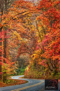 Autumn in Austin, Texas.wow would love to see this on a trip to Austin one fall day! Beautiful World, Beautiful Places, Beautiful Curves, Beautiful Pictures, Autumn Scenery, Autumn Lake, Winding Road, Seasons Of The Year, All Nature