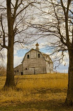 Barn -  by Christine Belt - Majestic Between The Trees Photograph -