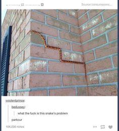 spider-snek, spider-snek