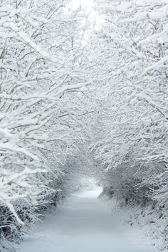 Wondrous snowfall