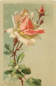 pink rose facing up, three buds Catherine Klein, Vintage Pictures, Vintage Images, Art Pictures, Illustration Botanique, Botanical Illustration, Art Vintage, Vintage Flowers, Floral Illustrations