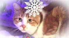 あーにゃん、初めてのクリスマスツリーを見る♥♥猫との会話を楽しむ動画 Conversation with a talking cat
