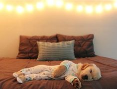 "48.7k Likes, 1,450 Comments - Golden Retrievers (@goldenretrievers) on Instagram: ""10 Puppies Napping in Pajamas ❤️ Follow them @mrs.sarahknapp @izabellahb @sunshine.state.mango…"" #goldenretriever"