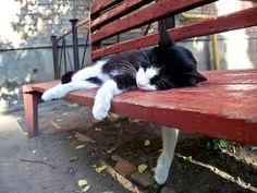 kitty nap..  .........barns and farm