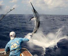 fishing   Big Game Fishing World – Website Review
