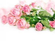 # Roses Flowers Tender Sparkle Wallpaper, Rose Wallpaper, Bokeh, Hd Flowers, Beautiful Pink Roses, Rosa Rose, Rose Images, Bloom Blossom, Images Wallpaper
