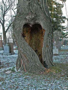 heart in a tree in a cemetery