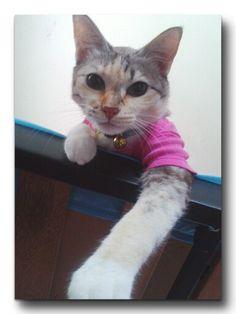 Miss pink Kuya..