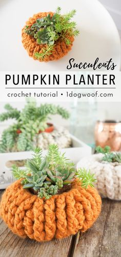 Free pattern for simple crochet succulents pumpkin planters. Great for beginners. Just in time for Halloween!