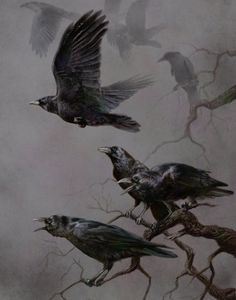 Cool picture of Actual Ravens