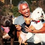 Cesar911.com | New Series Premieres Friday, March 7th at 9pm ET/PT Exclusively on Nat Geo Wild
