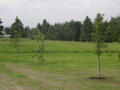 Mes nouveaux arbres.