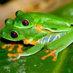 Mandy Saves Frogs Charitable Organization