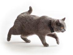 ☛ Die besten GPS-Tracker für Katzen im Test ✅ Katzenortung via GPS-Katzenhalsband & Peilsender ✅ Häufige Fragen ✅ Aktuell: Alle Tests für Oktober 2017) ✅