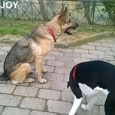 Today my girlfriend was at the park. We had much fun together. 🐾🐾🐶 Follow JOY at her Facebook page for many more photos and videos:  https://www.facebook.com/JOYMixedBreedGirl/  #dog #instagramdogs #ilovemydog #instapuppy #dogfamily #doggie #ilovemypet #dogofinstagram #happydog #dogface #dogsofig #dogselfie #doglovers #dogsofinstaworld #petstagram #doglover  #petlover #instadog #dailypawwoof #happydog_feature #dogsubmit