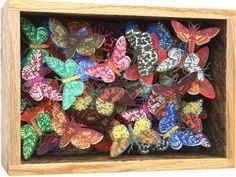box of moths  frank whitstable