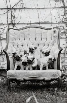 little bitty pugs! by deana