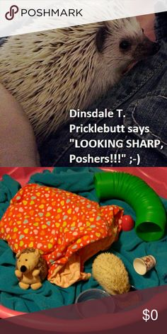 Happy Friday Hedgie pic!!! Dinsy is 3 years old as of August, and he's my one and only dependent. He's not too big on fashion, but he does love crazy soft velour sweatshirts with big kangaroo pockets, that he can hide out in while we watch some Cutthroat Kitchen. Other