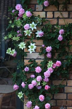 Climbing Roses, Flowering Trees, Clematis, Garden Ideas, Floral Wreath, Scenery, Gardening, Wreaths, Cats