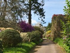 Burncoose GardensAs well as these informal, woodland delights there are many other noteworthy highlights in the gardens. Once described as 'a garden oasis in the mine wastelands of Cornwall' the garden has progressed from being a typical Cornish spring garden into a garden for all seasons...