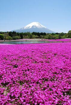 parc national Takino Suzuran Hillside, Sapporo, Hokkaido.