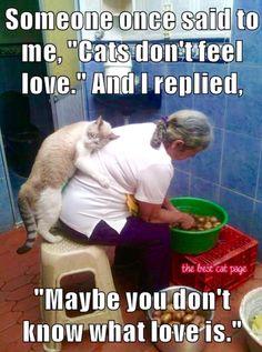 Cats feel love.