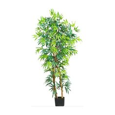 Fancy Style Bamboo Silk Tree - 5 Feet Tall ** Be sure to check out this awesome product.