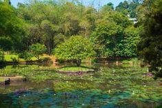 Peradeniya, Kandy, Sri-Lanka