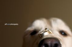 Dog with rings. Engagement