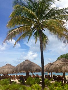 OK I know it's not really the USA. Cozumel Island, Riviera Maya Mexico, Cozumel Mexico, Life Is A Journey, Central America, Places Ive Been, Vacations, Cruise, Places To Visit