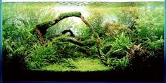 Aquascaping is one of my favourite forms of Tank presentation. I would LOVE to have a tank set up like this at home :)
