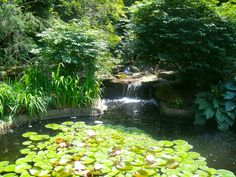 Rodef Shalom Biblical Botanical Garden - Gardens - See the displays of plants in a setting reminiscent of the land of Israel at Rodef Shalom Biblical Botanical Garden