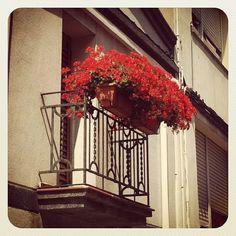 Flors amb balcó #Gelida #Penedes