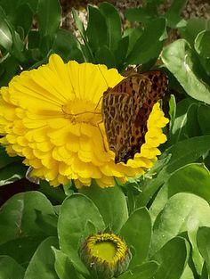 Butterfly's World