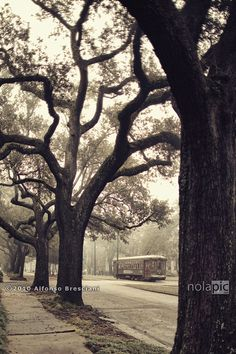 The St. Charles Ave streetcar line has been designated a National Historic Landmark! Fine Art Prints available at: http://bit.ly/P0d8PR