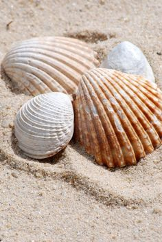 Shells on the Beach Illustration Photo, Marine Life, Photos, Pictures, Under The Sea, Starfish, Sea Glass, Sea Shells, At Least