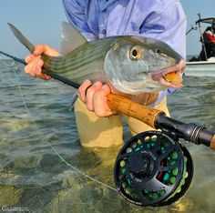the other bucket list fish. Fishing Boats, Fly Fishing, Salt Water Fish, Fishing Quotes, Gods Creation, Saltwater Fishing, The Great Outdoors, Exploring, Bucket